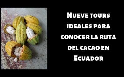 Nueve tours ideales para conocer la ruta del cacao en Ecuador
