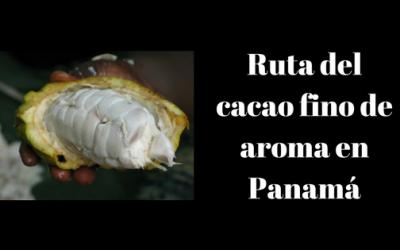 Tours para recorrer la ruta del cacao fino de aroma en Panamá