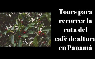 Tours para recorrer la ruta del café de altura en Panamá