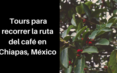Tours para recorrer la ruta del café en Chiapas, México