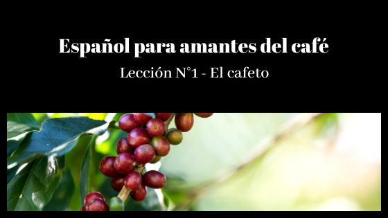 Español para amantes del café – Lección N°1- El cafeto y el café