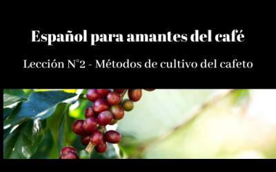 Español para amantes del café – Lección N° 2 – Métodos de cultivo del cafeto