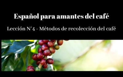 Español para amantes del café – Lección N° 4 – Métodos de recolección del café