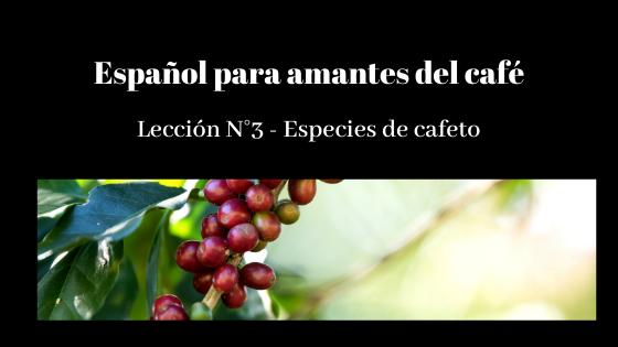 español para amantes del café lección 3